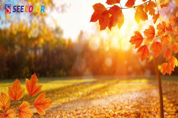 Sơn nhà theo chủ đề mùa thu